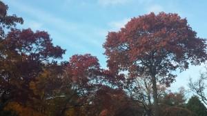 L. I. November Sky